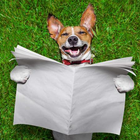 reir: perro súper cara divertida acostado de espaldas sobre la hierba verde de lectura de periódicos en blanco Foto de archivo