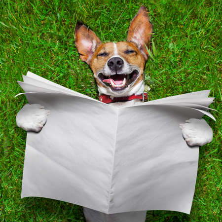 super funny face dog lying on back on green grass reading blank newspaper