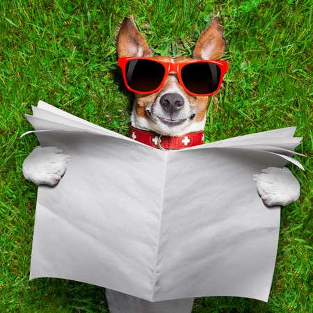 sonnenbaden: Hund liest Zeitung und eine leere entspannt auf Gras im Park Lizenzfreie Bilder