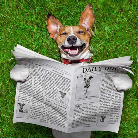 reir: perro leyendo el periódico y relajarse en el césped en el parque Foto de archivo