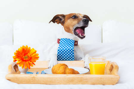 dog  complaining about everything and yelling too loud photo