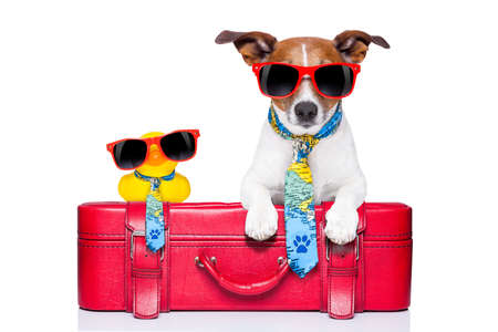 dog traveling with yellow plastic duck on top of luggage Stock Photo