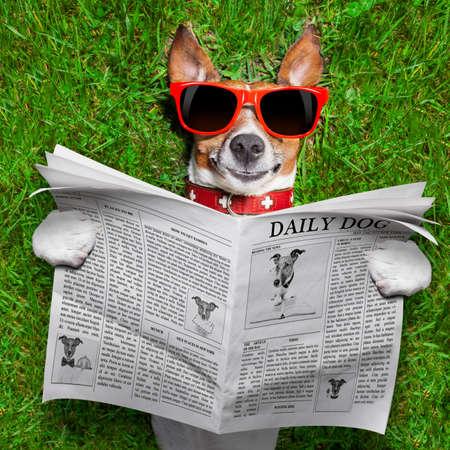 新聞を読む犬と公園の芝でリラックス 写真素材