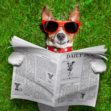 dog: 개 신문을 읽고 공원에서 잔디에 휴식
