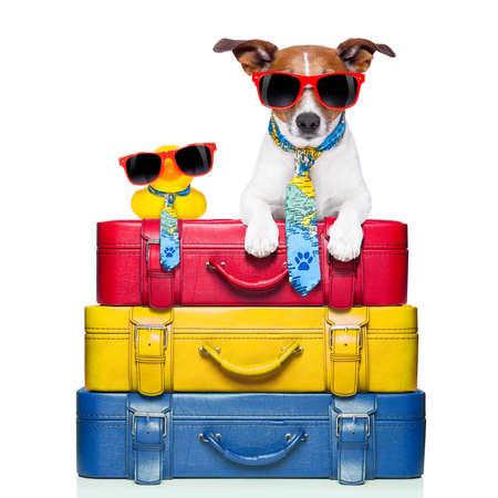 hond reist met gele plastic eend op de top van de bagage stapel