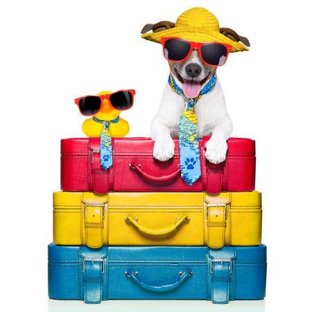 perro viaja con pato amarillo de plástico en la parte superior de la pila de equipaje Foto de archivo