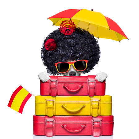 spaniard: dog from spain with too much luggage on holidays Stock Photo