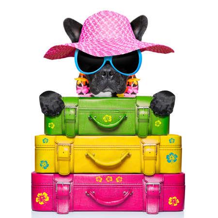 dog on holidays with umbrella and lot of luggage photo