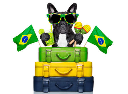 dog on holidays with  brazilian flags and a lot of luggage photo