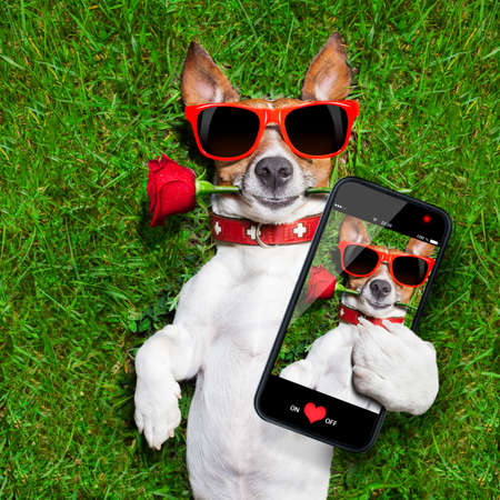 dog with a red rose in his mouth taking a selfie photo