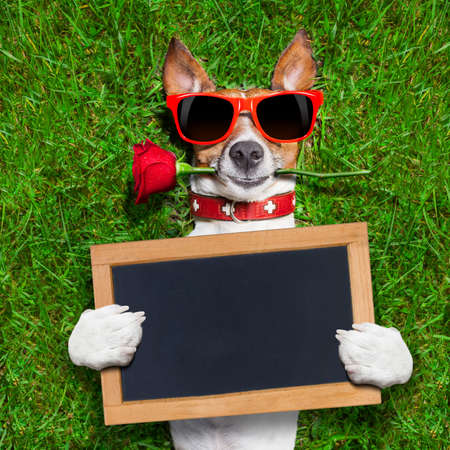 dog with a red rose in his mouth with an blank and empty blackboard or placard photo