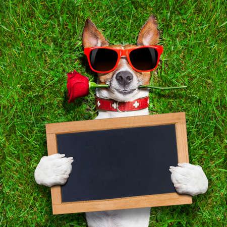 animados: perro con una rosa roja en la boca con una pizarra o cartel en blanco y vacío Foto de archivo