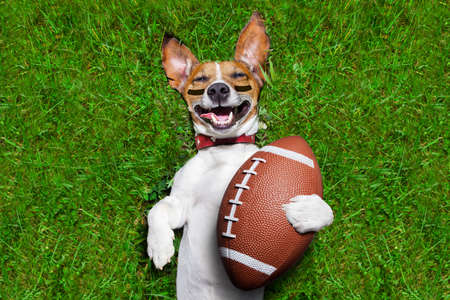 american football: soccer dog holding a rugby ball and laughing out loud