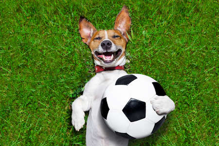 chien de football tenant un ballon et rire à haute voix
