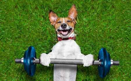 motion: superstarka hund lyft bing blå hantel bar
