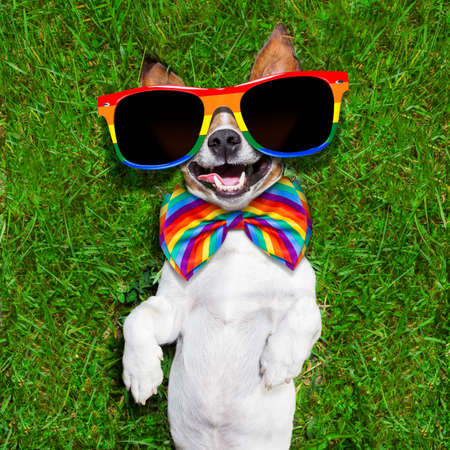 lesbianas: cara súper divertido perro gay acostado de espaldas sobre la hierba verde y riendo a carcajadas Foto de archivo