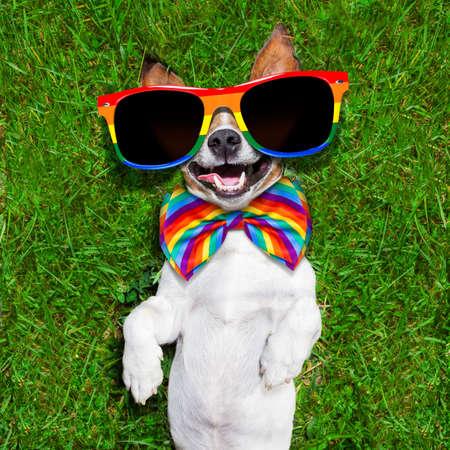 lesbienne: Super drôle de visage chien gay allongé sur le dos sur l'herbe verte et de rire à haute voix