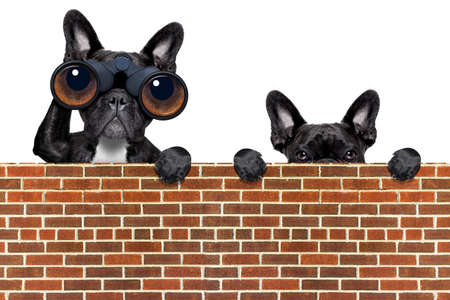 binoculars dogs searching, looking and observing with care above a stone wall Imagens