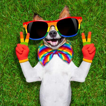 amor gay: cara súper divertido perro gay acostado sobre la espalda con paz o la victoria dedos mostrando orgullo