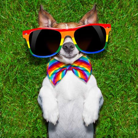 lesbianas: perro gay súper divertido acostado de espaldas sobre la hierba verde mirando fresco