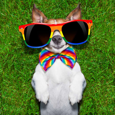 super funny gay dog lying on back on green grass looking cool Stock Photo