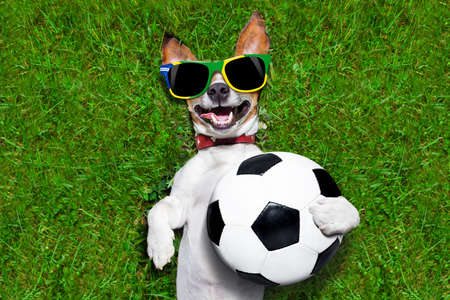 brazil soccer dog holding a ball and laughing out loud on football field photo