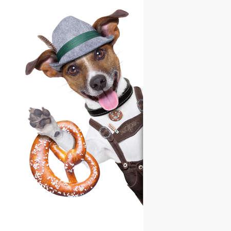 oktoberfest dog  smiling happy  with bavarian  pretzel bread besides a white blank banner or placard photo