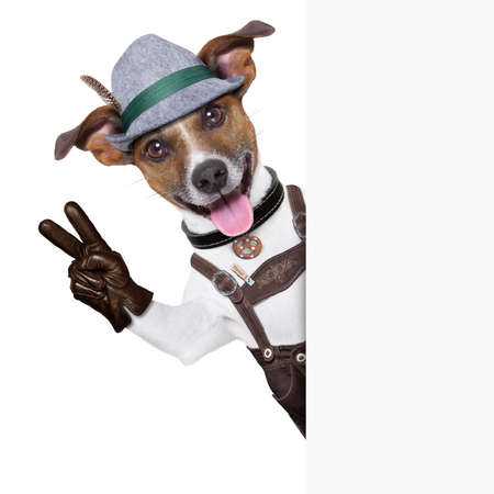 wiesn: oktoberfest dog  smiling happy  with peace or victory fingers besides white blank banner or placard
