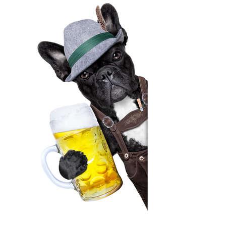 beer festival: bavarian german dog  with beer mug besides a white blank banner or placard