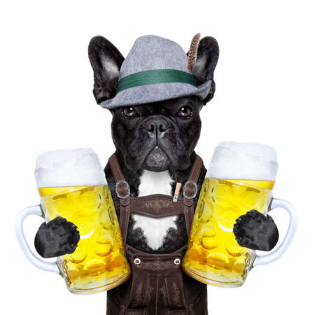 bavarian Deutsch-Hund hält zwei große Bierkrüge