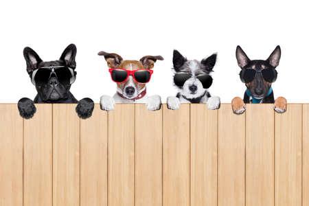 rij van vier honden achter een hek kijken en stalking Stockfoto