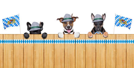 beerfest: three bavarian  dogs behind a fence