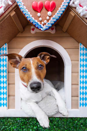 dog inside a bavarian house or beer tent photo
