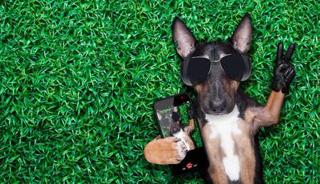 funny guy: chien tenant un selfie sur une prairie avec des doigts de paix et de victoire