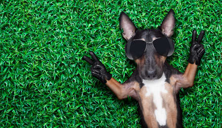 peace victory fingers dog lying on meadow with empty space beside