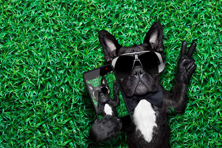 cute guy: dog taking a selfie on a meadow with peace and victory fingers