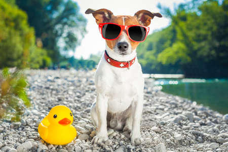 dog with sunglasses at the beach with yellow plastic duck photo