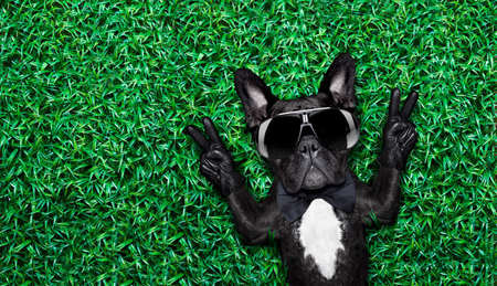 peace victory fingers dog lying on meadow with empty space beside photo