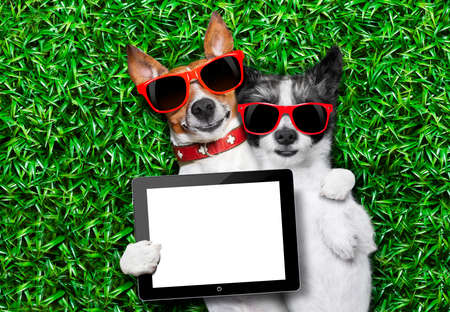 couple of dogs in love very close together lying on grass holding a blank and empty tablet pc or touchpad as a banner