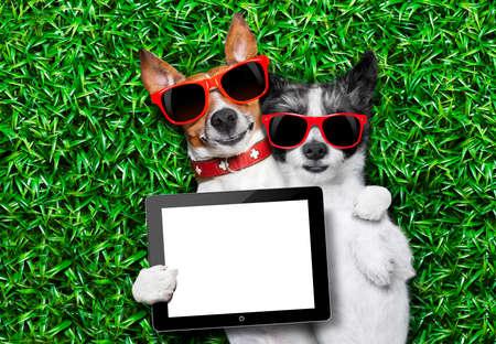 dog days: par de perros en el amor muy juntos tirado en la hierba sosteniendo un tablet pc en blanco y vacío o touchpad como bandera