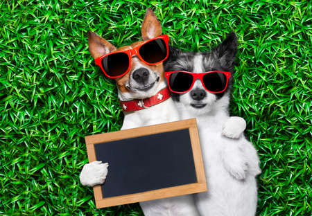 couple of dogs in love very close together lying on grass holding a blank and empty blackboard as a banner photo