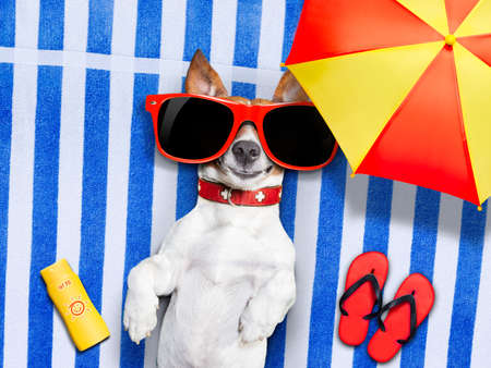 dog lying on fancy towel under the umbrella and with red sunglasses on sun tanning