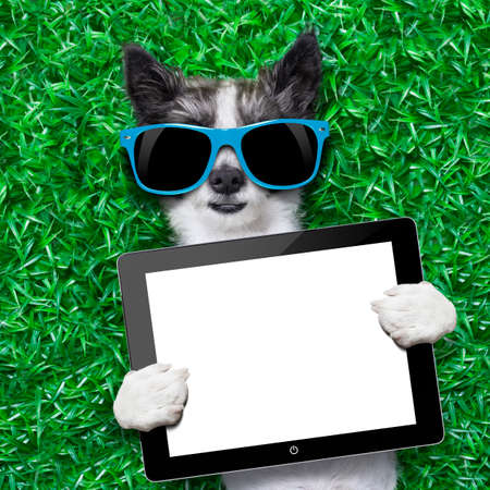 dog holding a blank tablet pc lying on green grass at the park photo