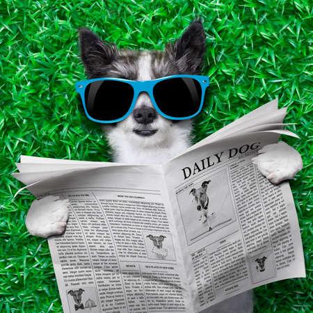 Perro leyendo un periódico tirado en la hierba en el parque Foto de archivo - 30507558