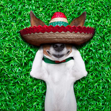 chilling out: dog taking a siesta on an empty meadow with mexican sombrero  chilling out