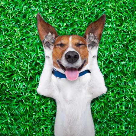 舌を突き出てと大声で笑う顔に愚かな狂気ダム式と芝生の上で横たわっている犬