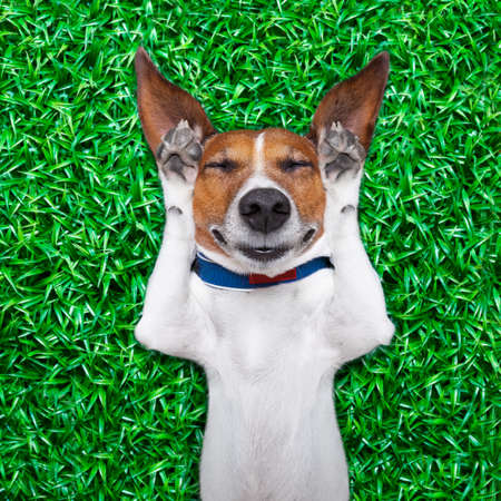 chill out: dog lying on grass with silly crazy dumb expression on face Stock Photo