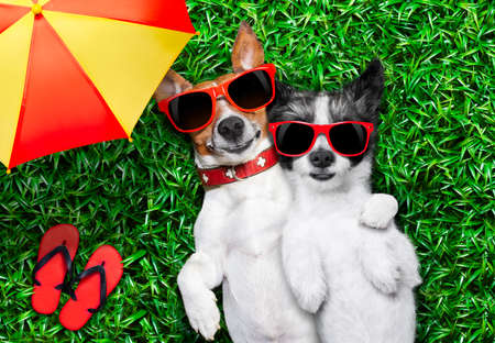 couple of dogs in love very close together lying on grass under the umbrella beside flip flops photo