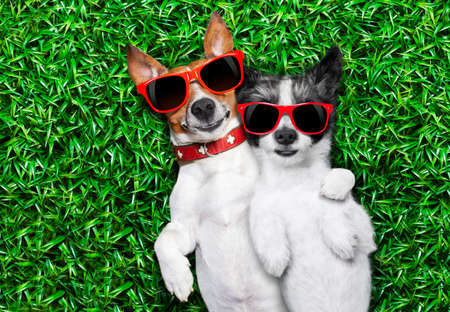 couple of dogs in love very close together lying on grass in the park with sunglasses chilling out