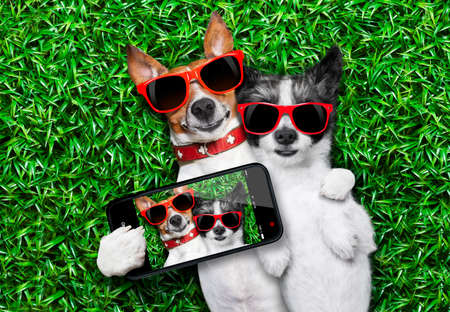 couple of dogs in love very close together lying on grass taking a selfie photo